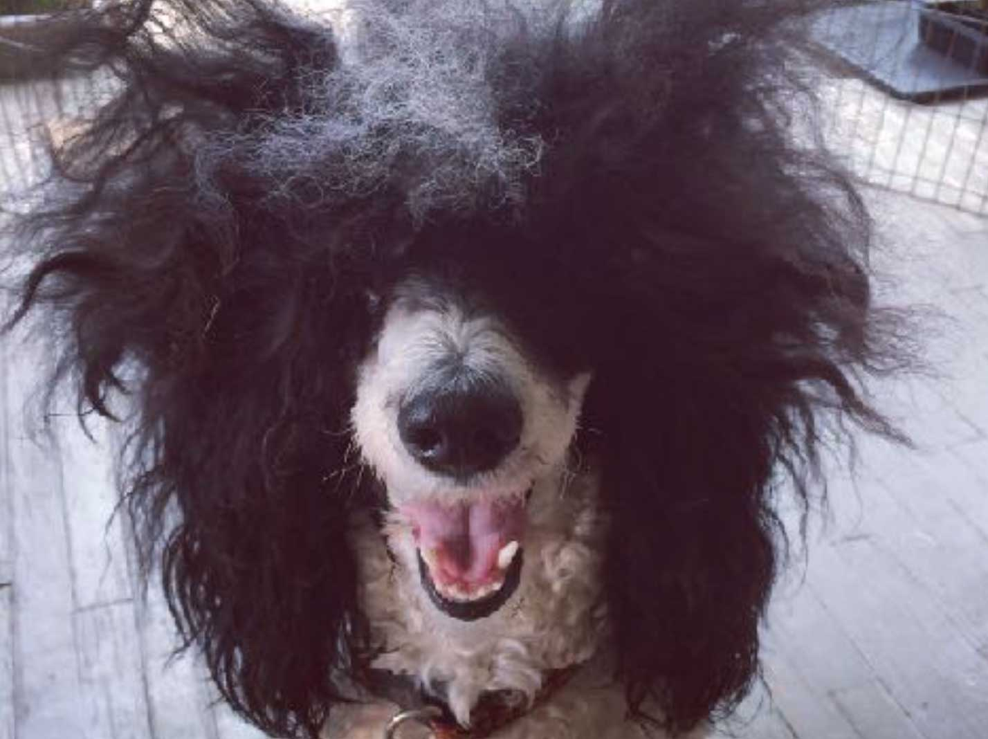 Who needs grooming happy dogs all dogs can benefit from routine grooming you dont need to have a poodle with a show coat to reap the rewards of a professional groomer solutioingenieria Choice Image