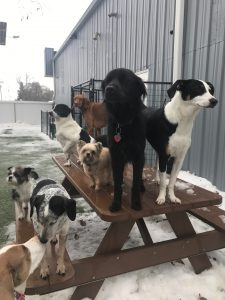 A day in the life of a daycare attendant at Happy Dogs